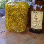 Place flowers in a jar and  cover with Sunflower or Olive Oil